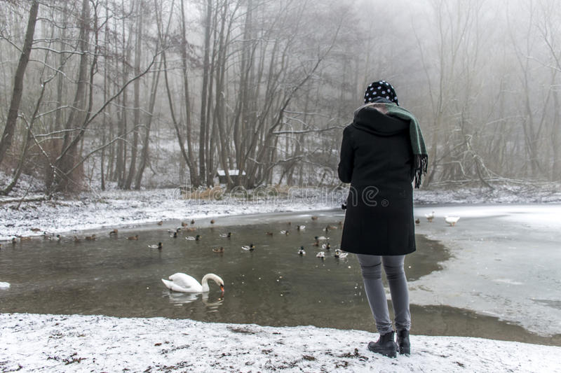 Woman feeding lake swans ducks Bird feed winter royalty free stock photo