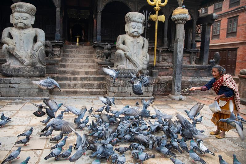 Woman  feeding pigeons. Woman feeding pigeons near a temple in Kathmandu, Nepal royalty free stock photos