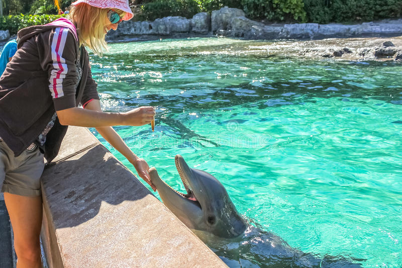 Woman feeds dolphin stock photos