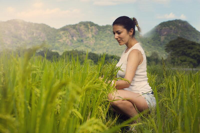 Woman in a Field royalty free stock photo