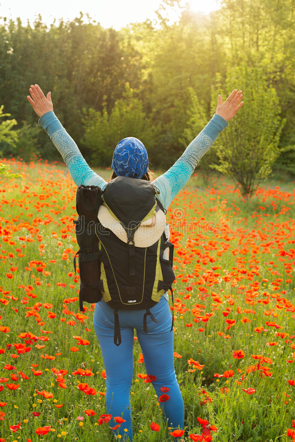 Woman in a field of blooming poppies stock images