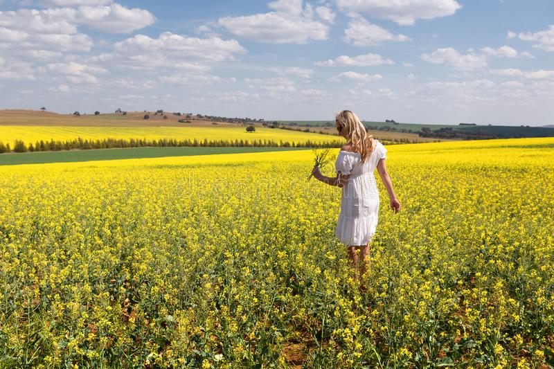 Woman among a field of canola plants flowering in spring sun royalty free stock photos