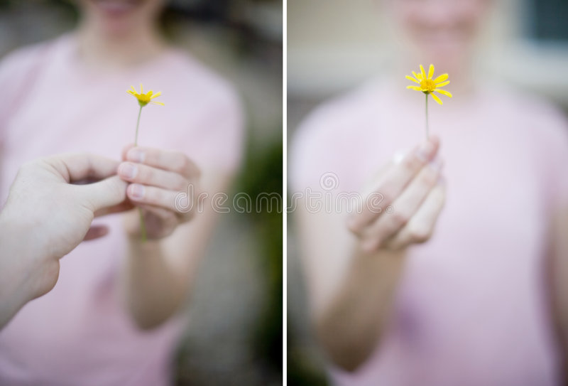 Woman Flower. Woman holding beautiful yellow flower wearing pink shirt and smiling stock image