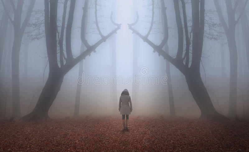 Woman in a foggy forest during autumn. Red leaves in a foggy forest and a woman walking on the trail stock images