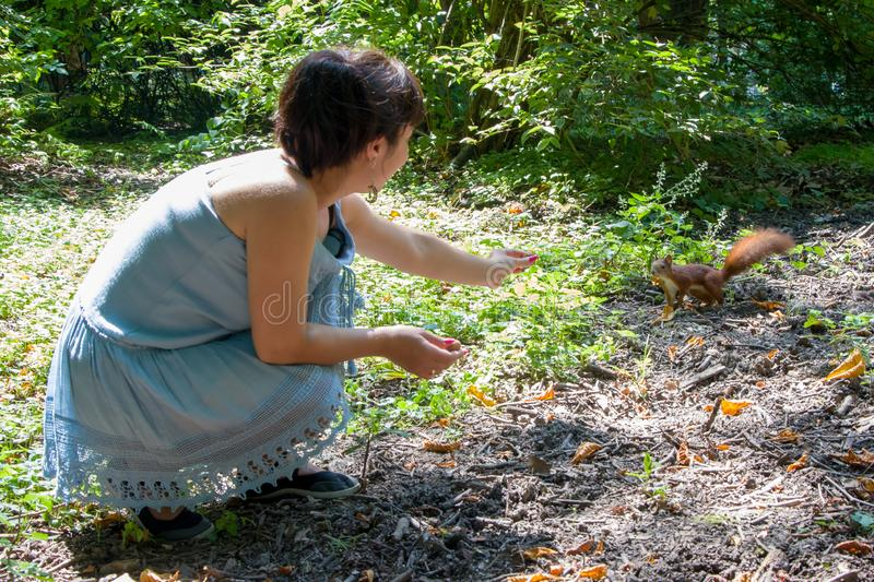 Woman in the forest feeds a manual squirrel with hazelnuts, communication with animal royalty free stock images