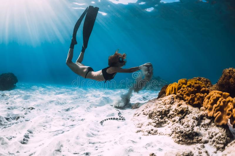 Woman free diver with fins near coral over sandy sea and sea snake stock photo