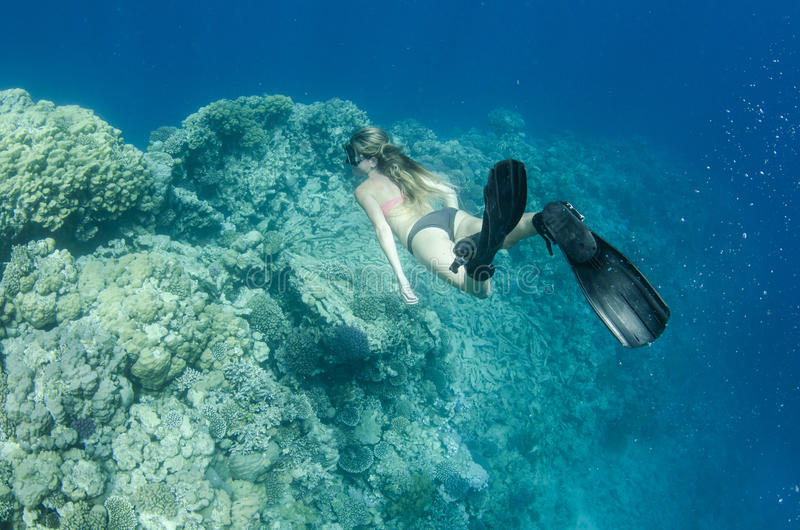 Woman free diving and snorkeling on a coral reef stock image