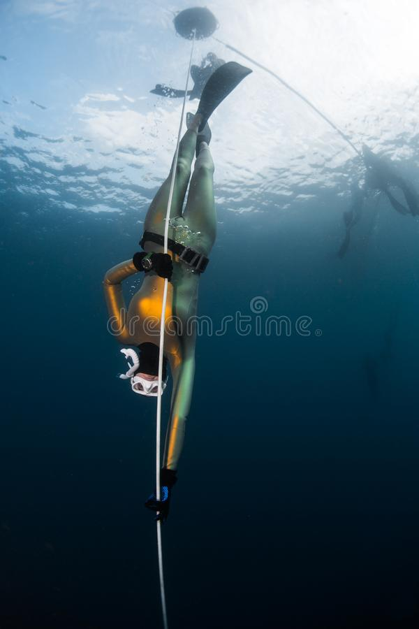 Woman freediver in the golden wetsuit descends along the rope stock photography