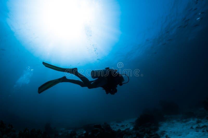 Woman freediver royalty free stock image