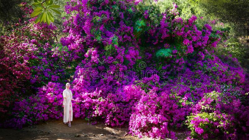Vacation travel in Hawaii. Woman in garden with purple flowers on Hawaii vacation. royalty free stock image