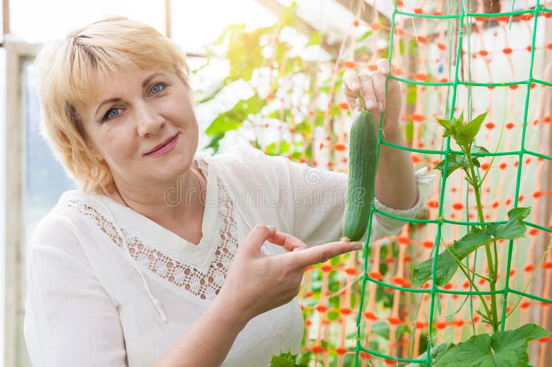 Woman in the garden harvests and processes the fruit in her backyard. Woman in the garden in summer and autumn. An adult middle-aged woman collects cucumbers royalty free stock image