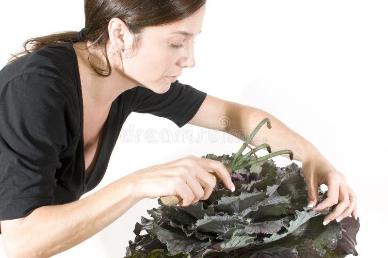 Woman Gardener Beautiful Winter Kale Potted Pla Royalty Free Stock Image