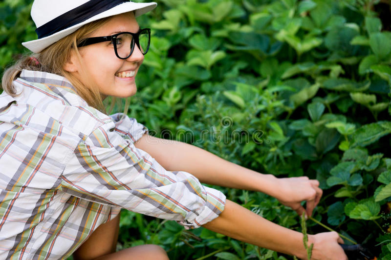 Woman gardener in shirt and hat takes care of harvest royalty free stock photography