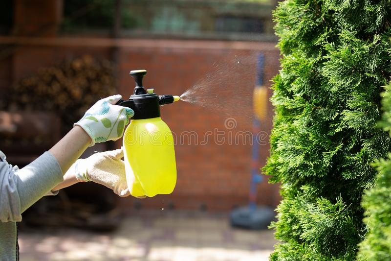Woman gardener spraying plants in the home garden.  stock photography