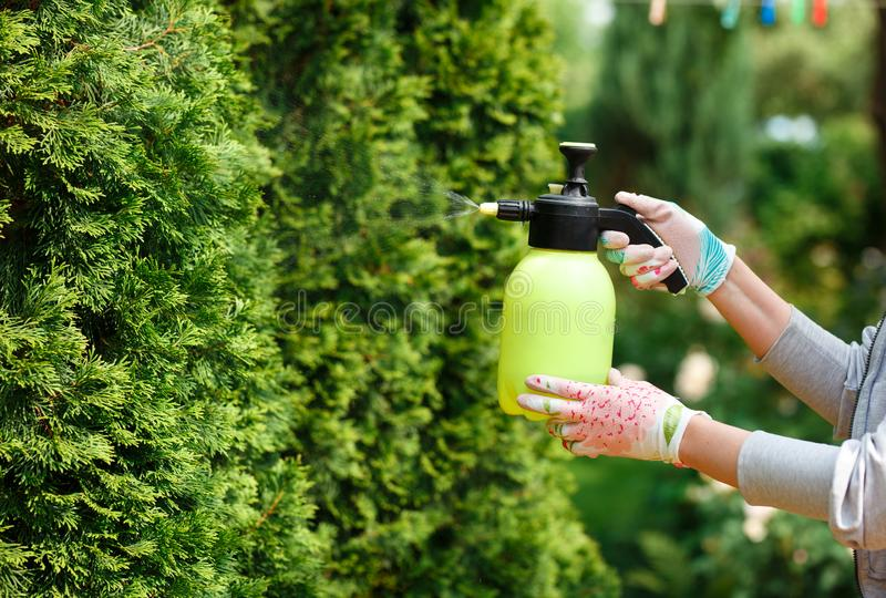 Woman gardener spraying plants in the home garden royalty free stock photography