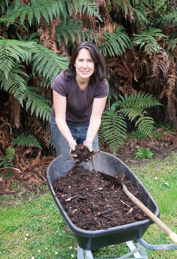 Woman gardening with compost in wheelbarrow. Middle aged woman gardening with home made compost in wheelbarrow. Photographed in New Zealand, NZ stock image