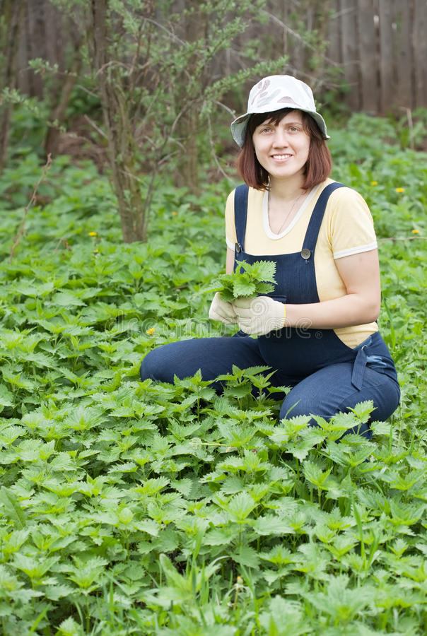 Woman gathers nettle. At spring garden stock photo