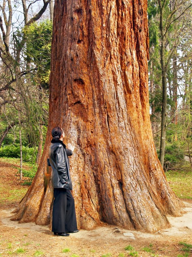 Download Woman And Giant Tree Royalty Free Stock Photos - Image: 14092108
