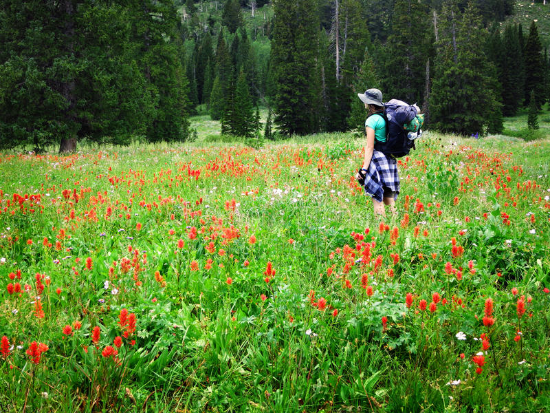 Woman Girl Backpacking with Wildflowers Taking Photograph. Woman young backpacking in wildflowers taking photograph stock image