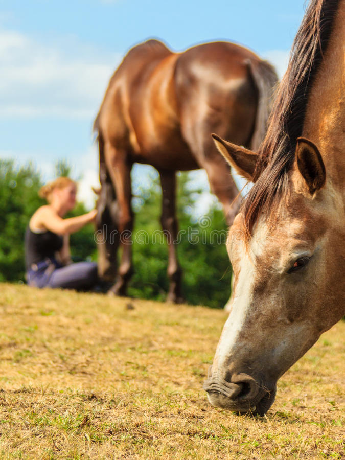 Woman girl taking care of horse. Woman girl taking care of brown horse. Female with animal outdoor royalty free stock photography