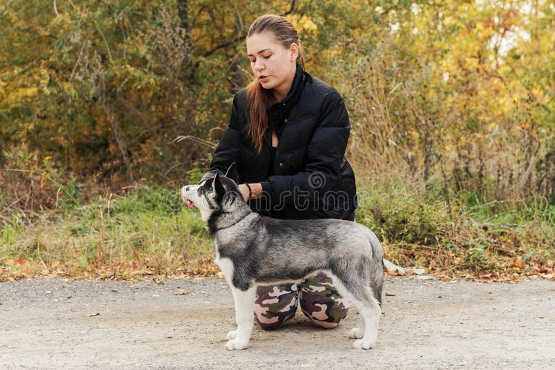 Woman gives a command to her dog puppy Siberian Husky in the autumn park. Dog training royalty free stock image
