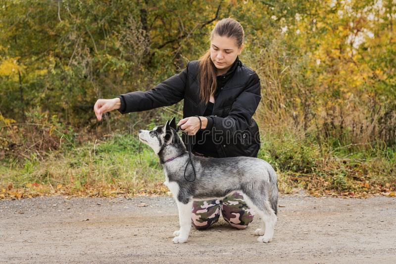 Woman gives a command to her dog puppy Siberian Husky in the autumn park. Dog training stock photos
