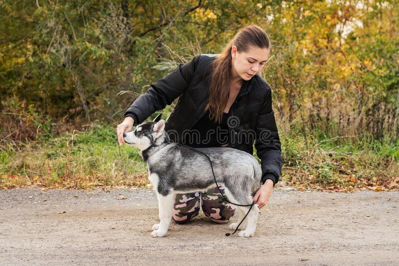 Woman gives a command to her dog puppy Siberian Husky in the autumn park. Dog training royalty free stock images