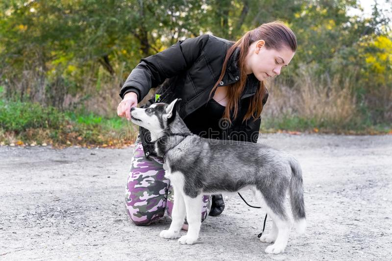 Woman gives a command to her dog puppy Siberian Husky in the autumn park. Dog training and obedience.  stock image