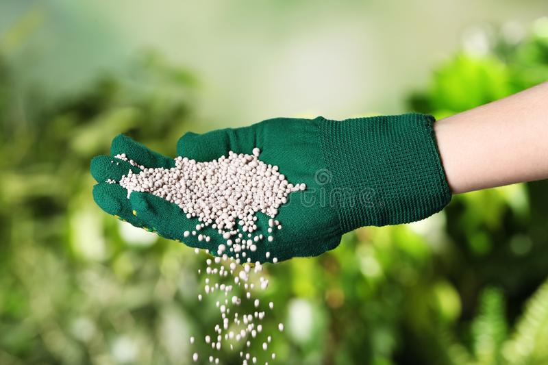 Woman in glove pouring fertilizer on blurred background. Gardening time stock photography