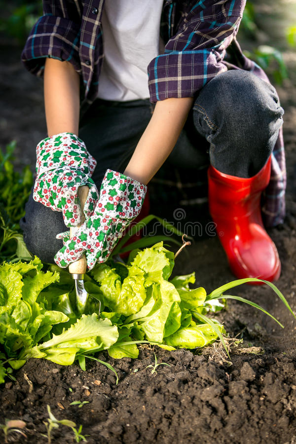 Woman in gloves working in garden with metal spade. Young woman in gloves working in garden with metal spade royalty free stock image