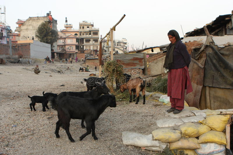 Woman and goats stock photography