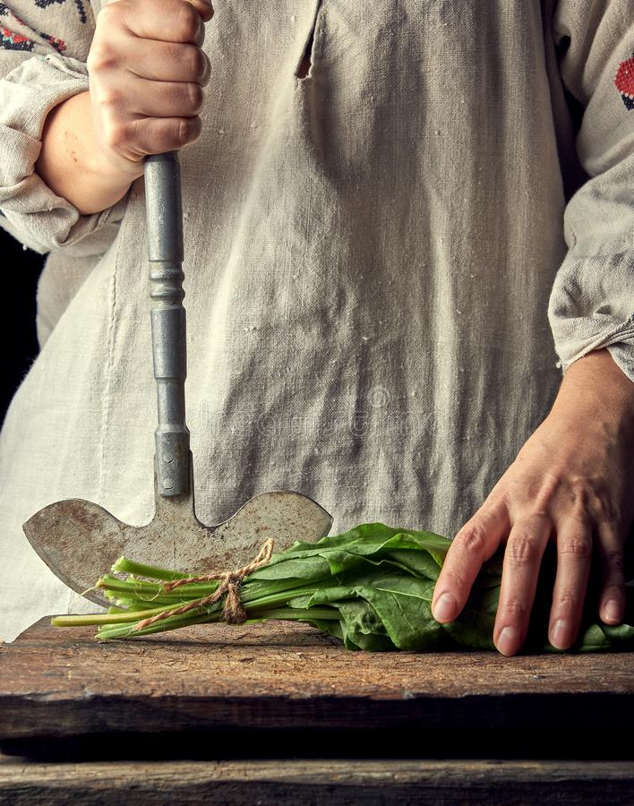 woman in a gray linen dress is cutting green leaves of fresh sorrel stock photography