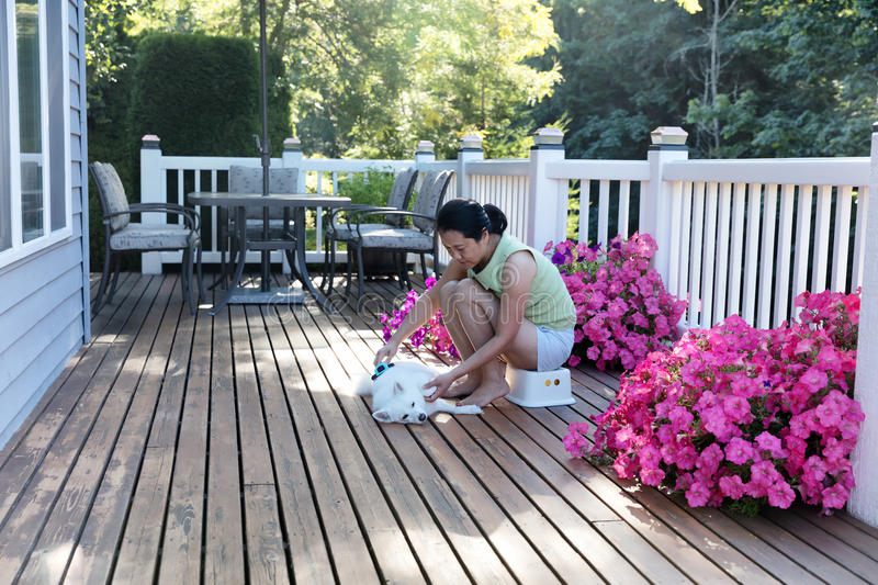 Woman grooming her dog while outdoors on home deck during summer royalty free stock images