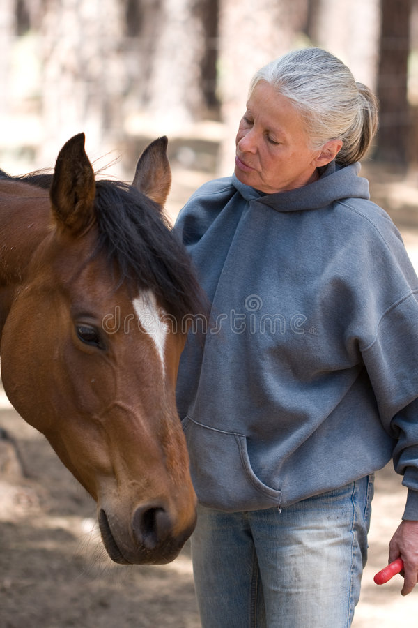 Woman grooming horse royalty free stock image
