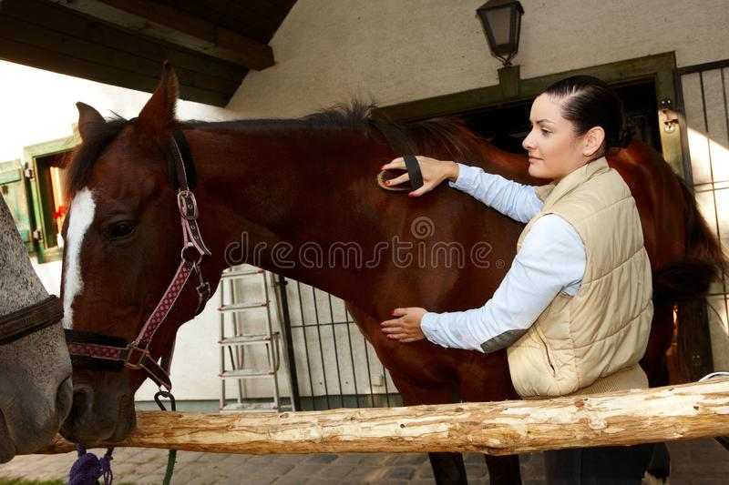 Woman grooming horse royalty free stock photography