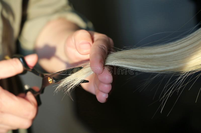 Woman hairdresser cuts the blonde hair. Hairdresser cuts the hair of blonde girl, scissors in female hands close up stock image