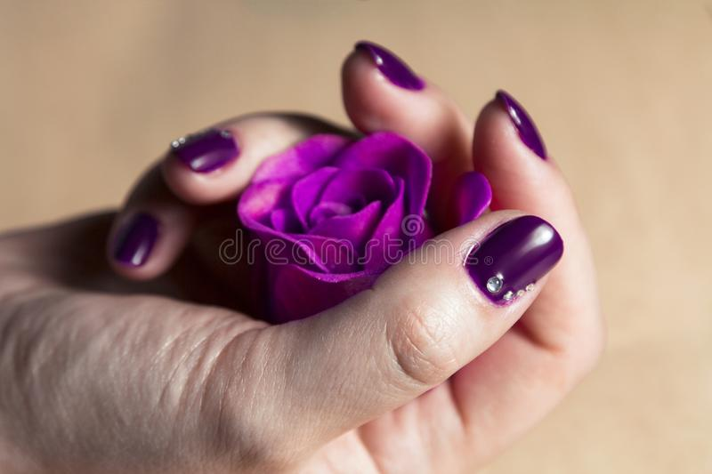 Woman hand with colorful nails macro. Holding a red flower stock photo