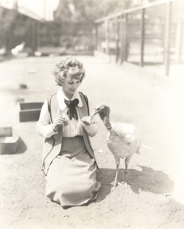 Woman hand feeding turkey stock image