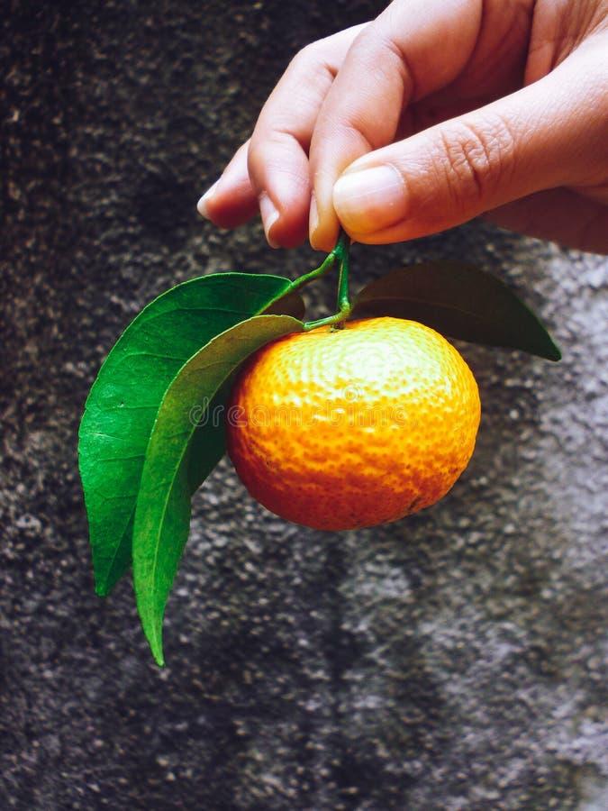 Woman hand giving away a mandarin orange royalty free stock images