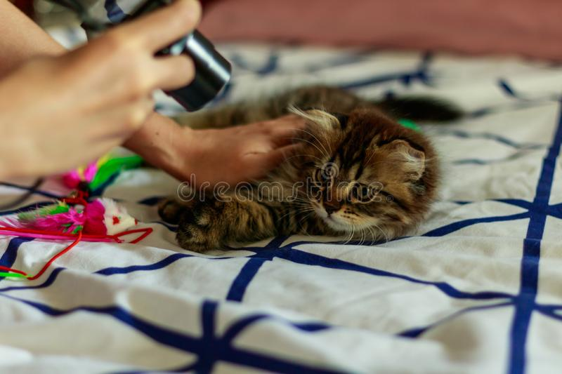 Taking picture of kitten cat stock photography