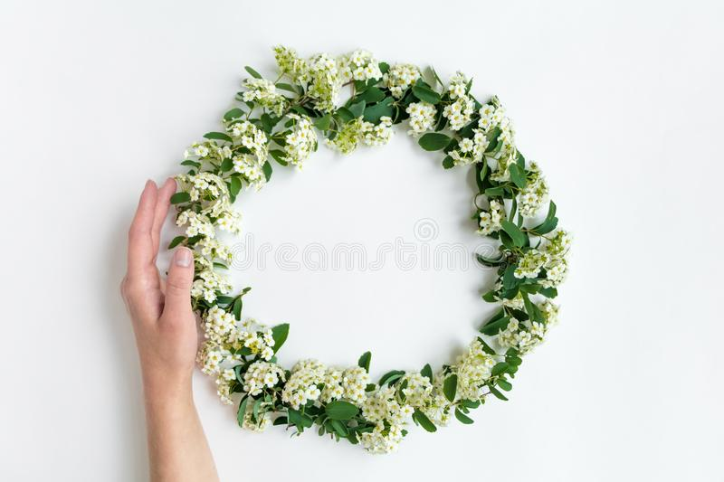 Woman hand holding flowering Spirea arguta brides plant wreath on white table. Flat lay, top view royalty free stock photos