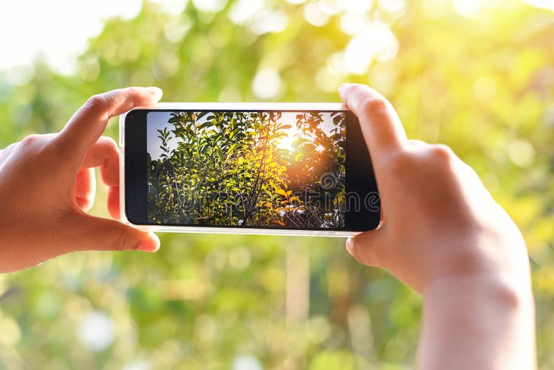 Woman hand holding smartphone taking photo picture of nature green tree and sunset bokeh background / mobile phone photography and. Video concept stock photography