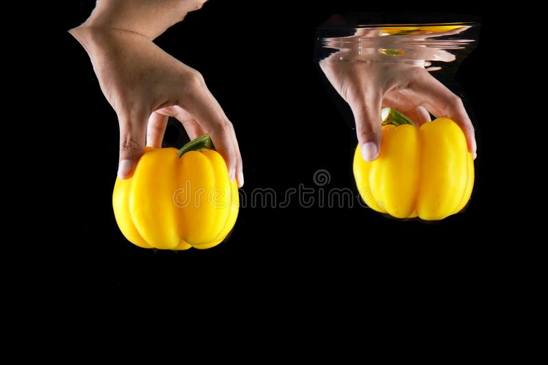 Woman Hand Holding Vegetable Yellow Bell Pepper Isolated. Close Up Vegetarian space. Concept Juicy Yellow Paprika Dropped into stock image