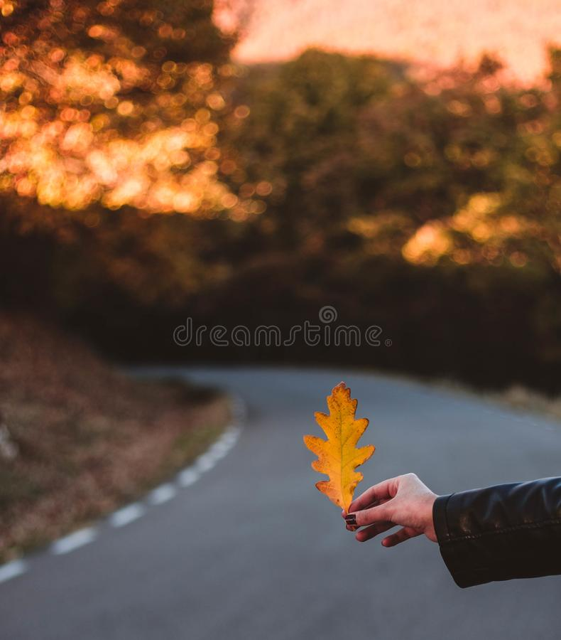 Woman hand holding yellow Oak leaf against autumnal forest. Seasonal concept. The colors and mood of autumn. Travel concept stock image