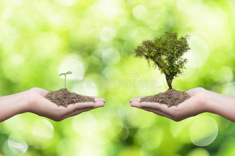 Woman hand holding young baby tree. And another hand holding big tree with soil in bokeh green leaves tree background. Earth Day April 22 concept stock photos