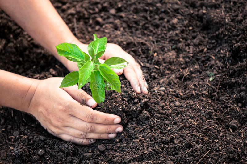 Woman hand planting young tree on black soil stock photography