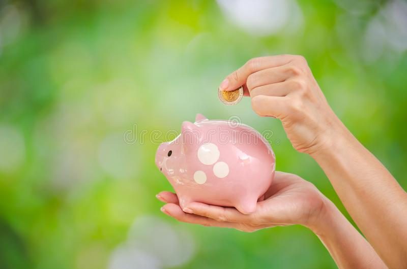 Woman hand putting money coin in to piggy for saving money wealth and financial concept with green tree in background stock images