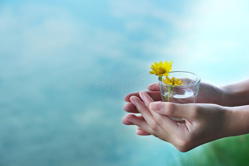 Woman hand with shot glass with yellow flower with blue nature background royalty free stock photos