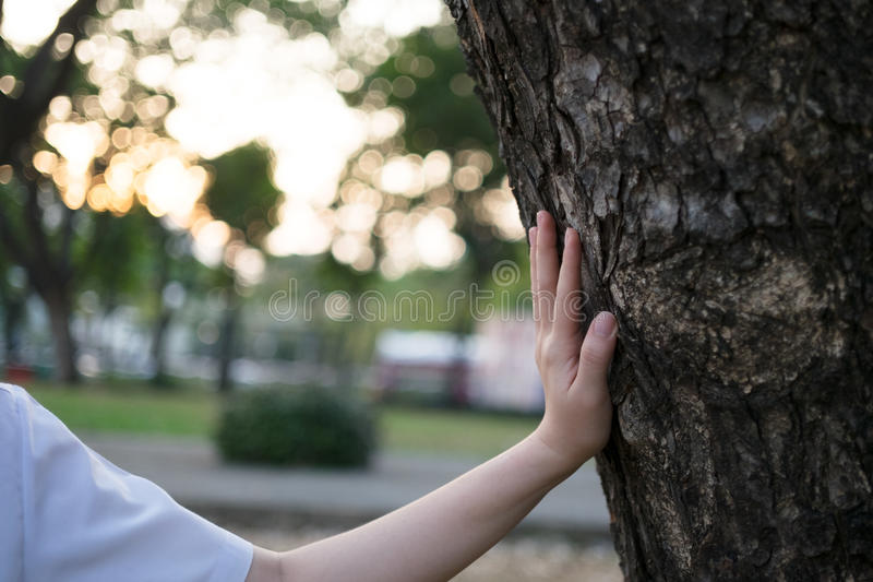 Woman hand touch a tree stock photos