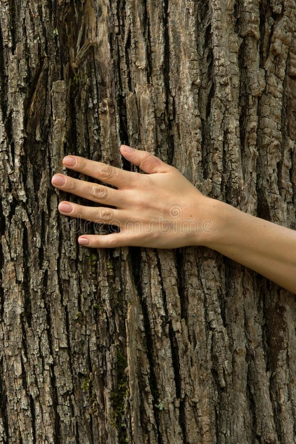 Woman hand on the tree bark, ecosystem protection concept, space. For text royalty free stock photos